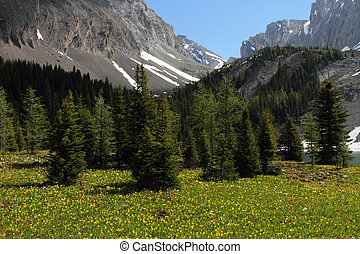 glaciar, wildflowers, lirio