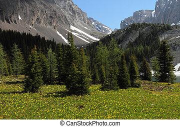 glacier, wildflowers, lis