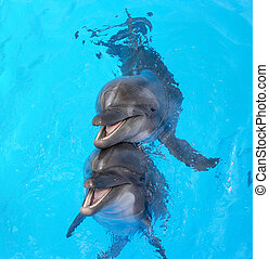 Glad beautiful dolphin smiling in a blue swimming pool water...