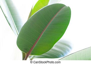 glad, macrophotography, flora, blad, illustratie, fig's, ...