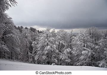 Glade and forest covered with snow