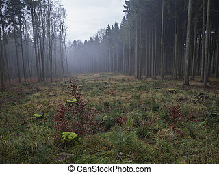 glade clearing with moss covered tree stump and misty spruce tree forest autumn landscape