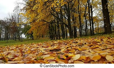 Glade in autumn Park covered fallen yellow leaves - Glade in...