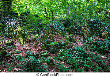 Glade in the tropical forest, covered with bumps and stones, densely overgrown with moss and grass