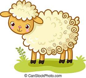 glade., sheep, 巻き毛, 立つ