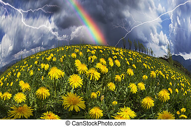 Glade Spring and summer flowers-dandelions under a clear sky with bright clean clouds pleases viewer saturated colors and the freshness of a new day. After the storm and rain especially bright foliage color