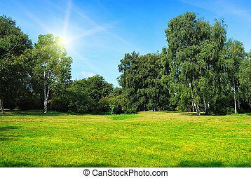 glade with green trees and sun