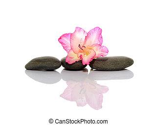 gladiola and pebbles