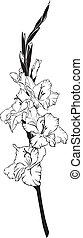 Black and white line-art image of a flower gladiolus