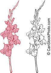 gladiolus - line-art image of a flower gladiolus
