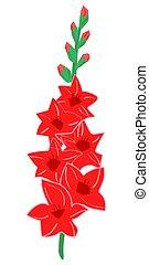 Gladiolus - Illustration of gladiolus on white