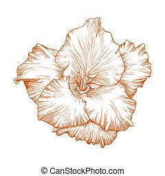 Gladiolus flower. - Vector gladiolus flower in vintage...