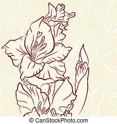 Gladiolus flower - Gladiolus flower vector illustration