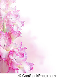 Gladiolus and bubbles