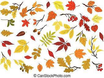 glands, arbre, automne, branches, feuilles