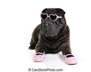 glanz, hund, in, brille