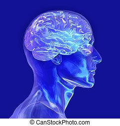 glas, hoofd, mannelijke , hersenen