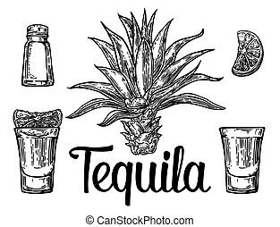 Glass and botlle of tequila. Cactus, salt, lime - Glass and ...