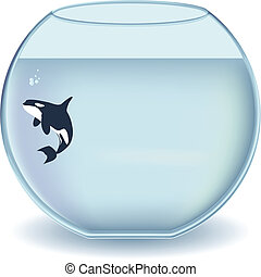 Glass bowl orca - Orcinus orca, Killer whale in an gigantic...