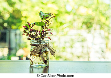 Glass jar and plants decoration on the table