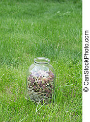 glass jar with dried clover