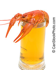 glass of beer and boiled crawfish closeup on white background