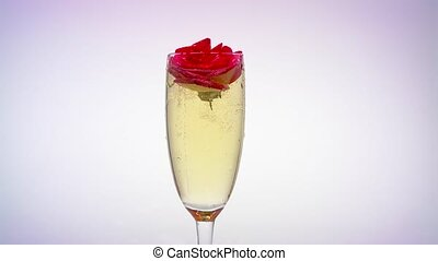 Glass of champagne throw a rosebud. White background