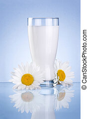 Glass of fresh milk and two chamomile flowers isolated on blue background