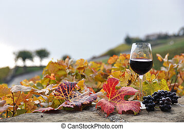 Glass of red wine on the terrace vineyard in Lavaux region, ...