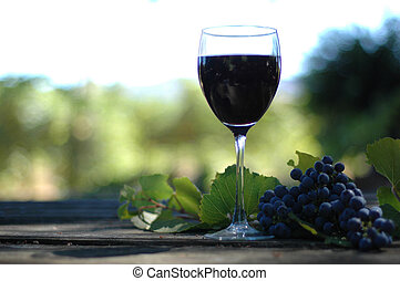 Glass of wine in the vineyard on a rustic table with zinfandel grapes.