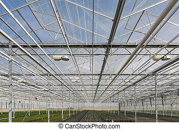 Glass roof of a big Dutch greenhou