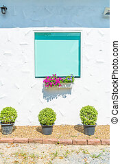 glass window on white wall with flower pot