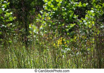 glatt, crabgrass