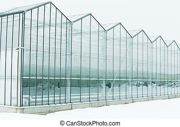 glazed greenhouse in the cold. Industrial large greenhouse with vegetables in the snow. Glass huge area.