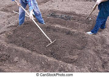 gleba, przygotowując