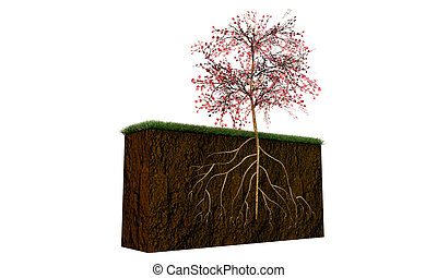 gleba, sekcja, drzewo