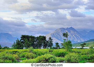 gleccser, nyár, nemzeti park