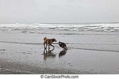glee, praia