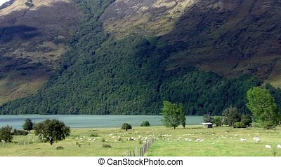 Glenorchy Landscape New Zealand - Glenorchy Landscape In The...