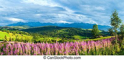 (gliczarow, verão, montanha, país, poland), gorny, panorama