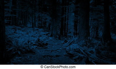 Gliding Along Forest Path At Night - Moving along rugged...