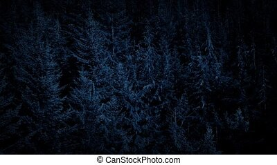 Gliding Over Summer Forest At Night