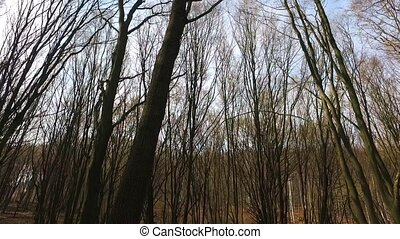 Gliding through the forest - Full HD footage of a hike...