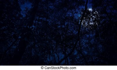 Gliding Under Jungle At Night - Moving through the jungle at...