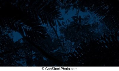 Gliding Under Jungle At Night - Moving slowly under dense...