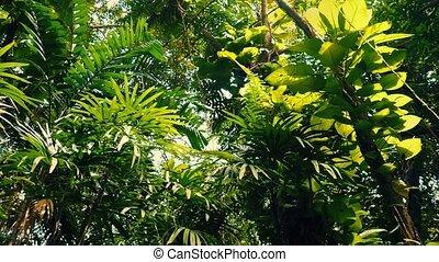 Gliding Under Lush Rainforest - Tracking shot moving past...