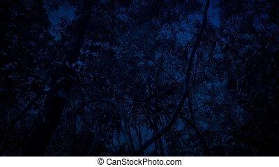 Gliding Under Rainforest At Night