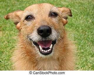 glimlachen, dog, vrolijke