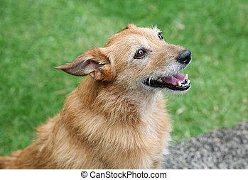 glimlachen, senior, dog, vrolijke