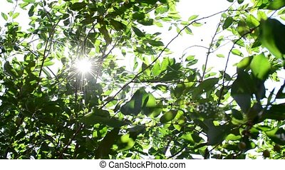 Glittering sunshine with sun rays coming through green...